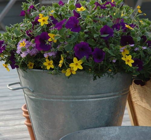 love the colorsPlastic Bottle, Container Gardens, Colors Combinations, Utility Buckets, Flower Pots, Aluminum Buckets, Large Utility, Gardens Pictures,  Flowerpot