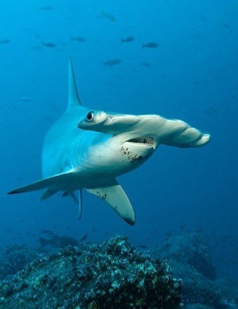 Hammerhead shark  SHOP: www.seayogi.es  IG: @Seayogipalma   Ropa para Yoga  ---  Yoga apparel & Gear  #seayogi #seayogipalma #mallorca #palma #yoga #boutique #españa