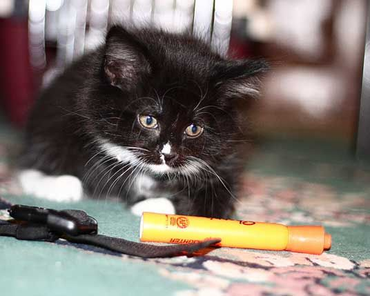 1000 Images About Fluffy Tuxedos On Pinterest Persian