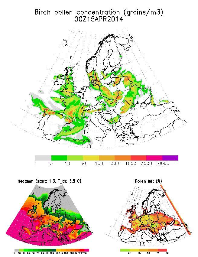Birch pollen concentration (grains/m3)