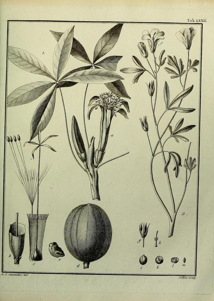 dissertationes botanical Druce, gc (1917) botanical exchange club of the british islesvol 4  royal  botanic garden, edinburgh, 607 pp  in: dissertationes botanicae vol 44.