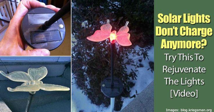 25+ Best Ideas About Solar Garden Lights On Pinterest