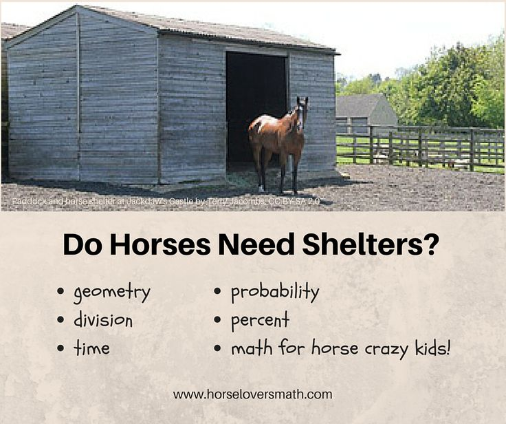 Researchers studied how horses use—or don't use—outdoor shelters. Their study provides Horse Lover's Math Club members the opportunity to learn more about horses—and a glimpse at what it takes to be an equine scientist! https://www.horseloversmath.com/dohorsesneedashelter