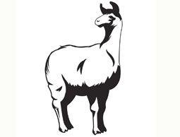 11 best Llama Tattoos images on Pinterest | Llamas, Llama ...