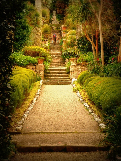 Tresco Abbey Gardens, Isles of Scilly taken by my sister. She is an amazing photographer and I need to put some of her prints on  my wall!!
