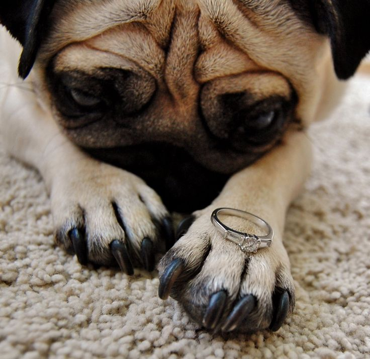 charlitt:  Engaged!   Awww will you?