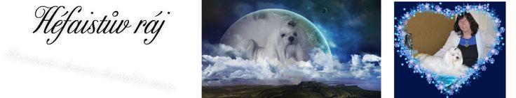 Štěňátka :: Maltézský psík