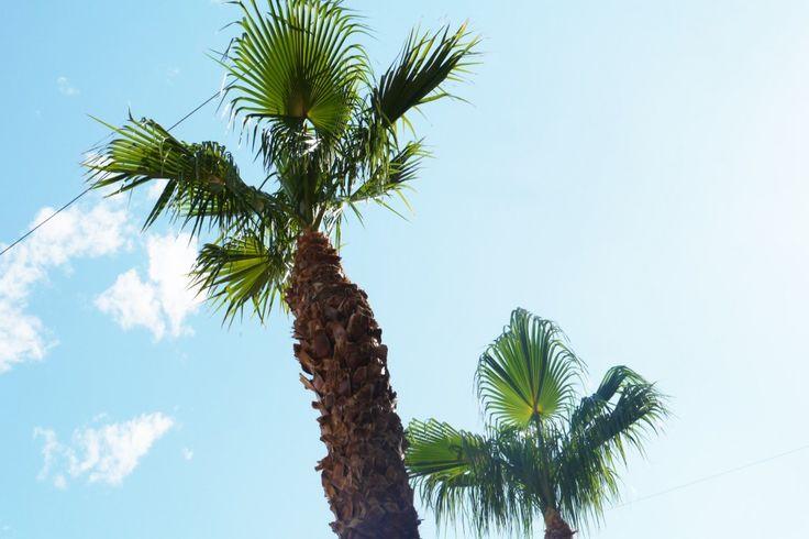 Sofie Martine blog - Spain Malaga Europe travel