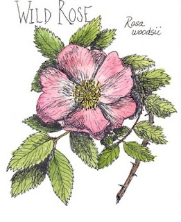 I always wanted a wild rose tattoo in my Canmore days.