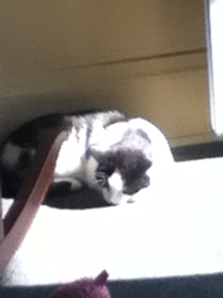 My Lilly cat snoozing in a sun puddle!: Cat Snooze, Lilly Cat