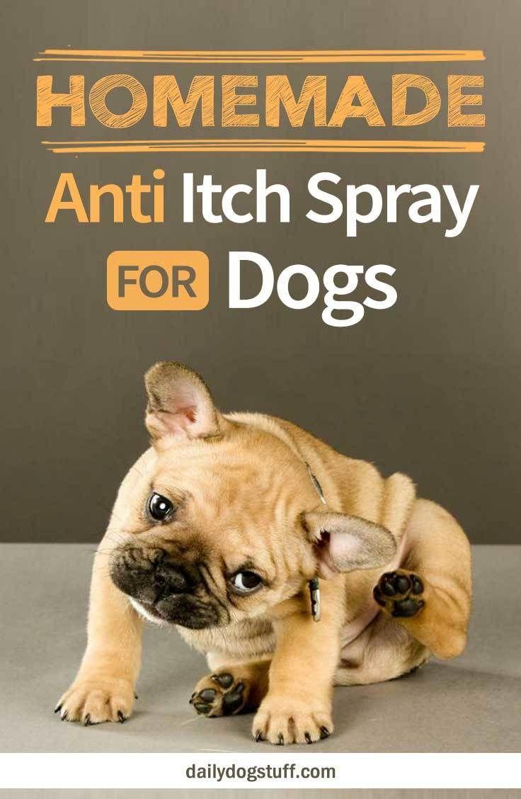 6e55a03315a3f6c6fbdb1b4328b334a3 - How Can I Get My Dog To Stop Scratching Himself