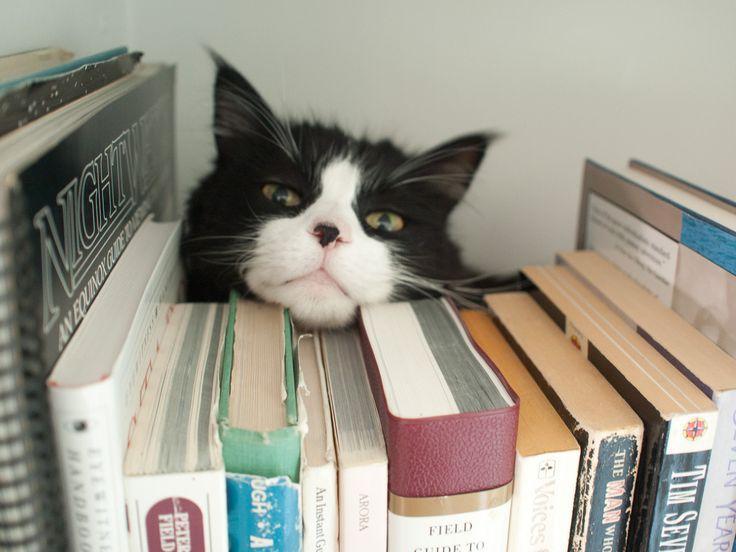 Read meow!!!!!!