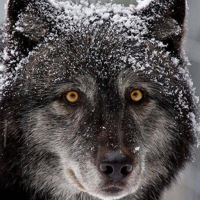 #wolf #travel #traveleze #traveling #holiday #holidays