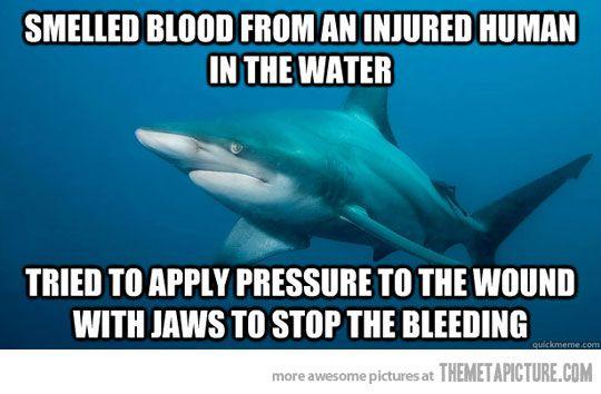 Misunderstood Shark ~ It breaks my heart to know how long we have misunderstood sharks.