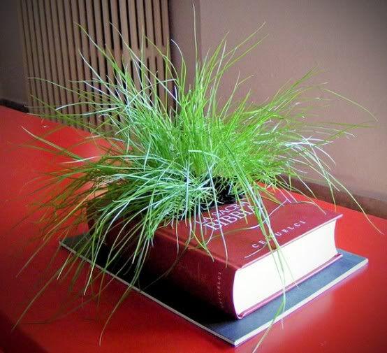 Repurposed Herb garden Ideas