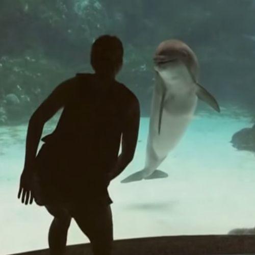 Meisje Maak Dolfijn aan het Lachen. Bekijk dit superleuke filmpje