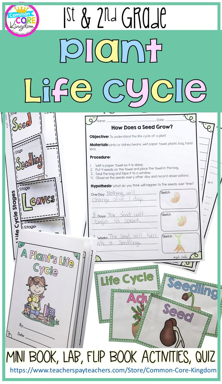 plant life cycle 1st 2nd grade common core kingdom life cycles plant lessons science. Black Bedroom Furniture Sets. Home Design Ideas