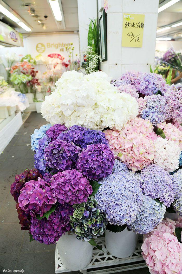 Hong Kong Flower Market: A Photo Diary