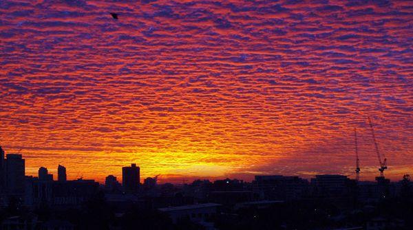 Lacunosus sunrise, Brisbane Australia.  © Lainy Ketelaars.