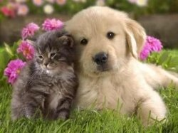 Any pet owner knows that our furry friends are more than just pets. They are truly part of the family. We're willing to do anything for them -...