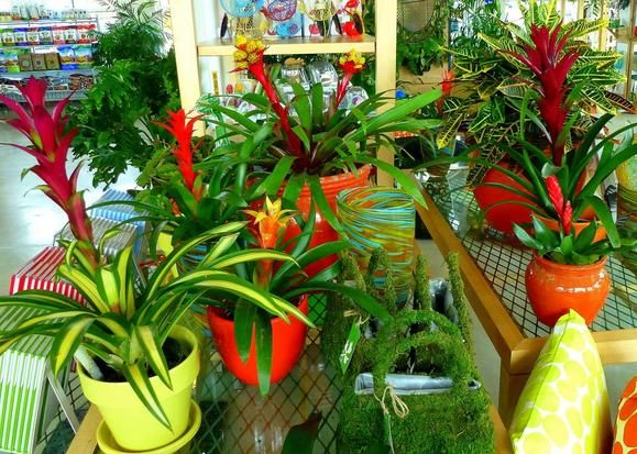 26 best bromeliads images on pinterest