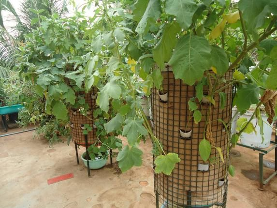 Tower garden from jute bag and steel wire mesh.  Cost less than Rs 500 (~$8).