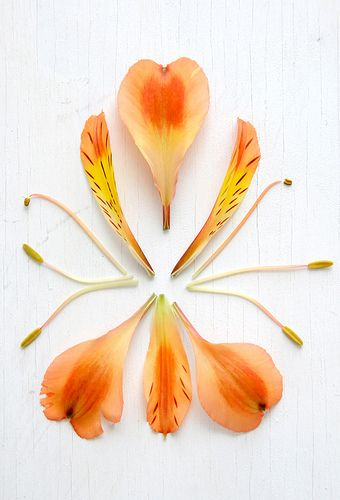 Souvenir Foto School: Day 6 - A is for Anatomy of an Alstroemeria