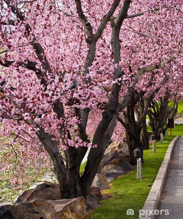 Fotobehang Bomen met Heldere Roze Bloesems op de rand van een weg • Pixers® – We leven om te veranderen