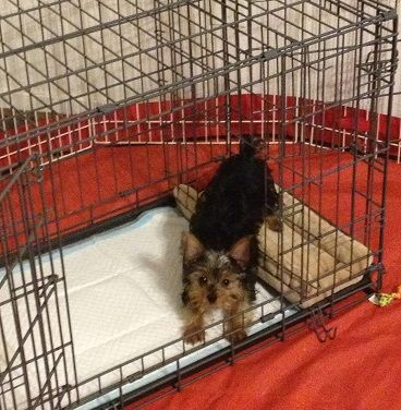 Modern Puppy Apartment Reviews
