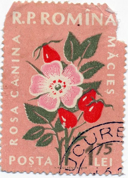 """Romanian Stamp - Dog Rose"" Loooovely."