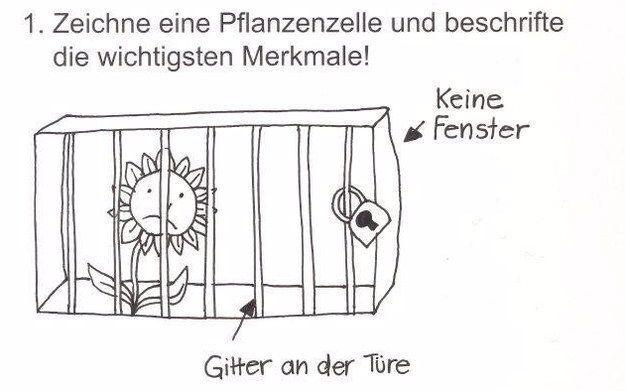 """""""Zeichne eine Pflanzenzelle!""""   19 Momente, in denen Schule witziger war, als Du dachtest"""