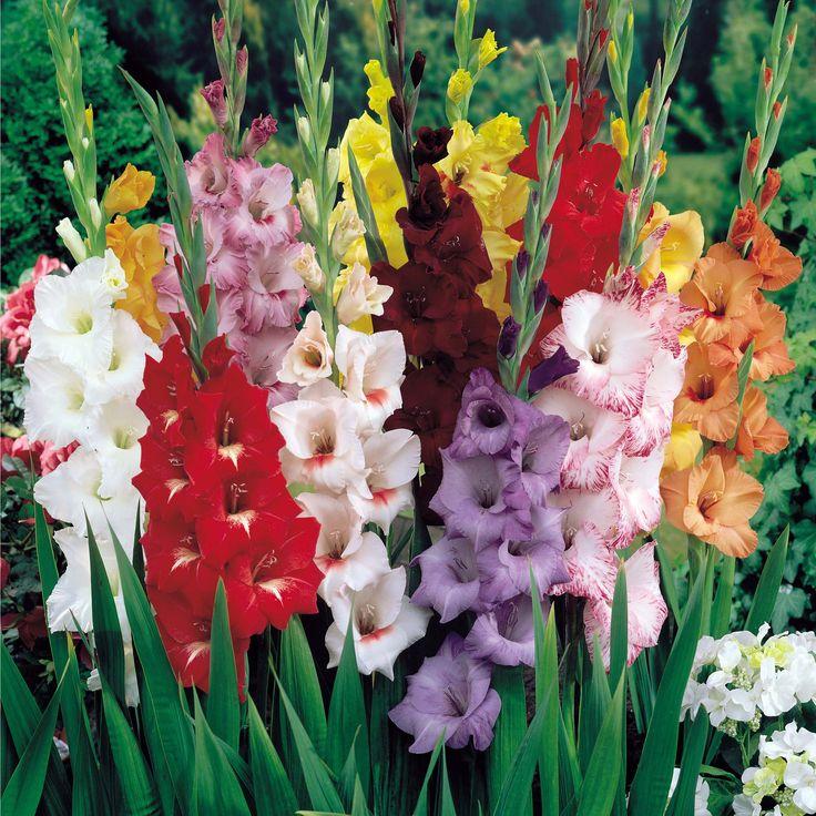 Купить осенние луковичные цветы почтой, калины рябины