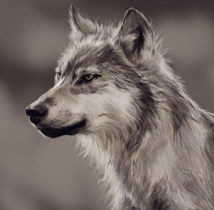 Amazing Wolf: 17 Best Ideas About Wolves Art On Pinterest