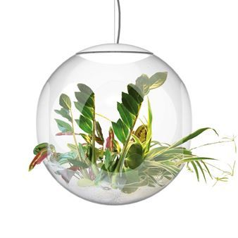 Babylone is a spherical plexi-glass pendant with room for plants. The 50 cm sphere has five openings that allows stems and leaves to meander out of the globe. Once planted in pumice (available a well-stocked flower shops), your plants need watering and maintenance only every third week. The selection of plants that can be used is wide and with the pumice in different colors every globe can have its unique expression.