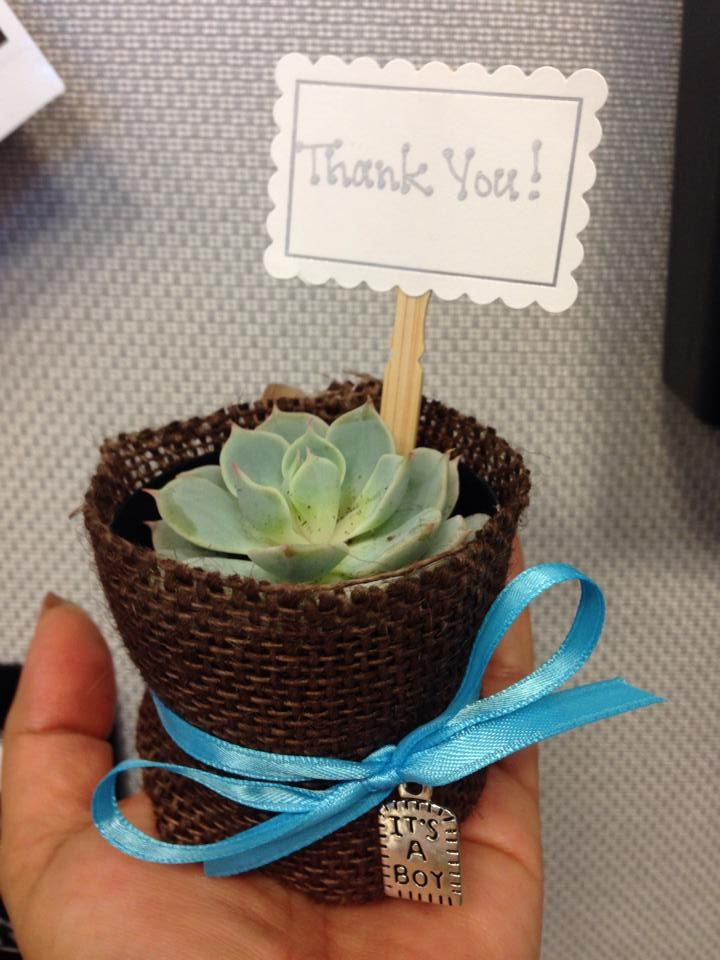Succulent favor used for a baby shower.