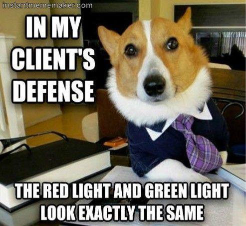 6e5b032b1ec06b72807e3d85b97692db meme maker lawyers 78 best animal memes images on pinterest animals, animal memes,Anteater Meme Generator