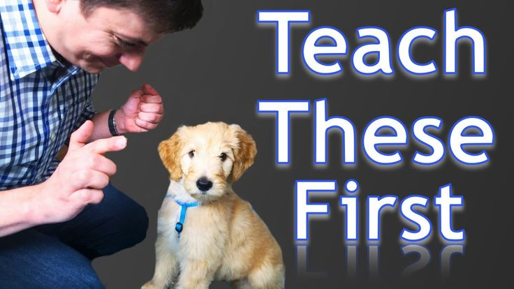 First Things You Can Teach Your NEW PUPPY