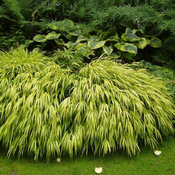 Les 25 meilleures id es de la cat gorie couvre sol for Plante grasse couvre sol