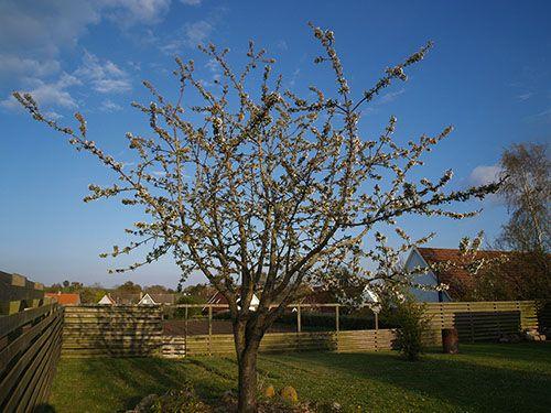 Fritids hus til salg på Samsø med stor have bl.a. med flot kirsebærtræ