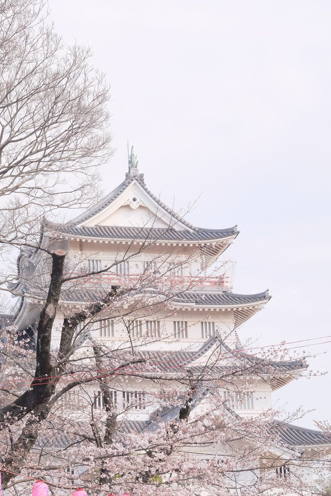 cherry bright sky by HAMACHI!  Chiba castle Japan