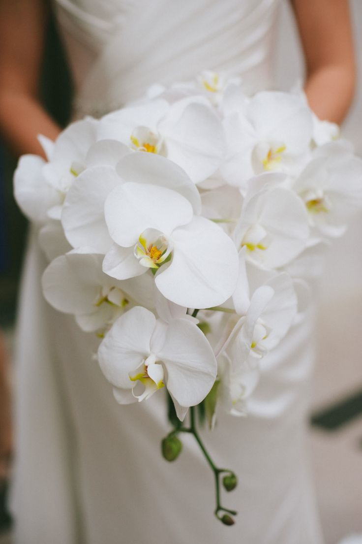 Modern cascading bridal bouquet with white Phalaenopsis orchids. Gorgeous.