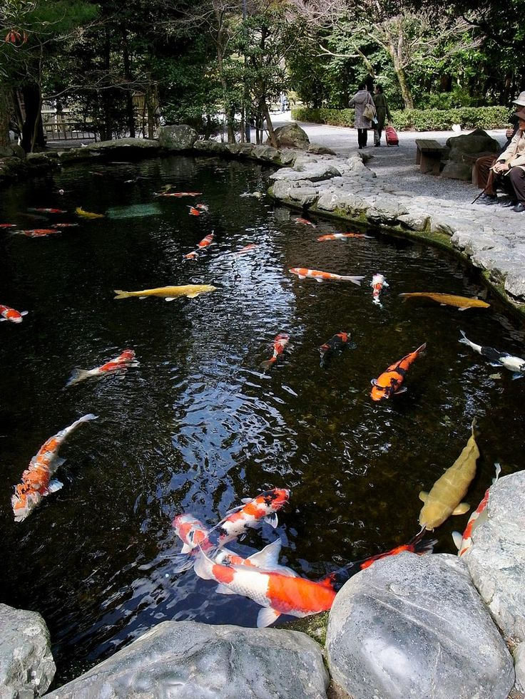 1000 images about ponds and waterfalls on pinterest for Blue koi pond liner