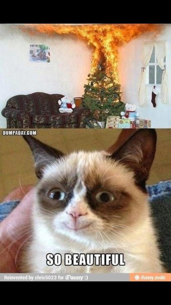 VWVortex.com - Tard the Grumpy Cat Thread!