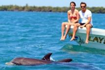 Riviera Maya Tours is an offer of excursions and activities guided from Tulum, Playa del Carmen and Riviera Maya with multilingual guide.