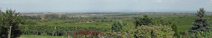 Rhine rift, a view to the east from the Palatinate (Germany). Filmed at the vineyards near the city Neustadt an der Weinstrasse. In the background of the picture Mannheim (especially a power station de:Großkraftwerk Mannheim) and the mountains of Odenwald can be seen.