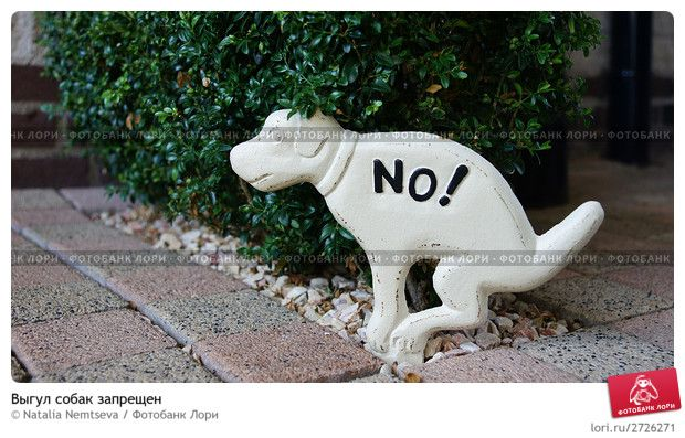 выгул собак запрещен фото: 2 тыс изображений найдено в Яндекс.Картинках