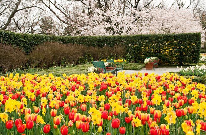 America's Best Spring Flower Festivals