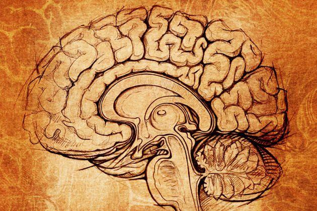 Aufbau: Das Gehirn unterteilt sich in Großhirn, Zwischenhirn, Mittelhirn, Hinterhirn und Nachhirn