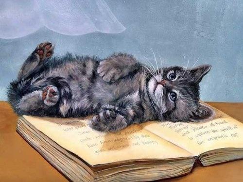gato sobre libro