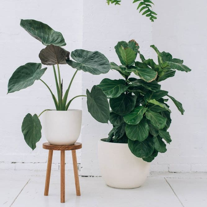 Ideas for decorating my own pots